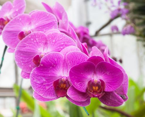 Orquideas da Oficina da Terra Floricultura